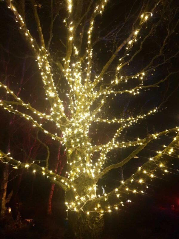 Nutley Farm Christmas Lights